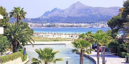 Stranden vid hotell Venecia i Alcudia på Mallorca, Spanien.