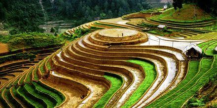 Risfält i Vietnam.