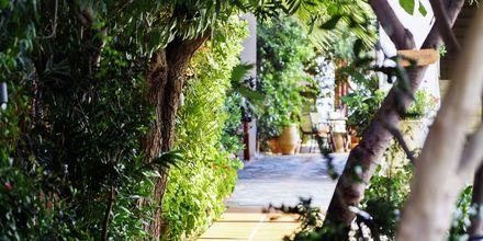 Villa Dora i Platanias på Kreta, Grekland.