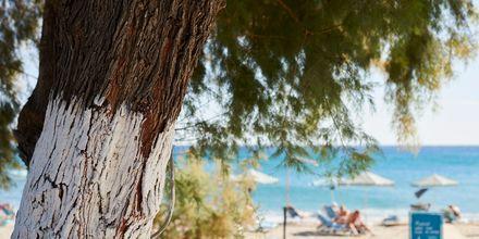 Längs stranden i Votsalakia finns det trevliga tavernor.