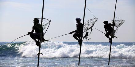 De berömda styltfiskarna syns ofta längs Sri Lankas sydkust.