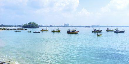 Fiskebåtar i Weligama Bay, Sri Lanka