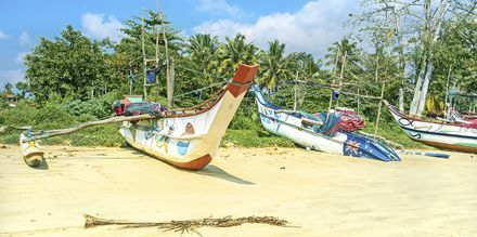 Fiskebåtar på stranden i Weligama Bay, Sri Lanka.