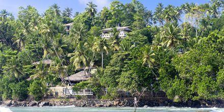 Bukten vid kuststaden Mirissa, nära Weligama Bay i Sri Lanka.