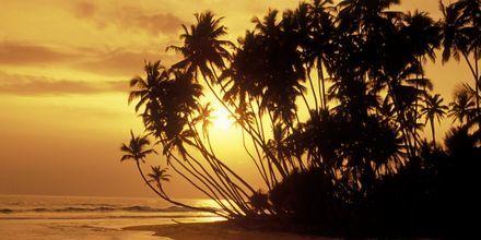 Solnedgång i Weligama Bay.