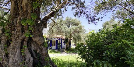 Hotell White Rock på Samos.