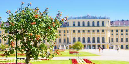 En annan sak det finns gott om i Wien är pampiga byggnader och slott. Här, en skymt av Schönbrunn slott.
