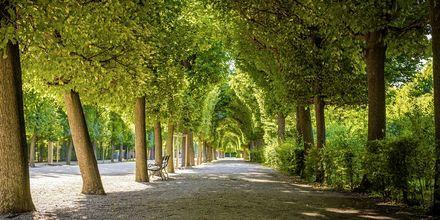 En vacker parkgång i Wien, Österrike.