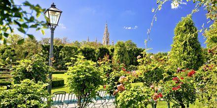 Hälften av Wien består av grönområden.