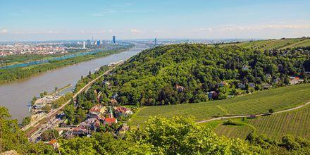 I närheten till Wien finns elva bra vandringsleder. Här, från Leopoldsberg, har man fantastisk utsikt över staden.