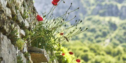 Koppla av i lugna omgivningar i Zagoria, Grekland.