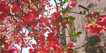 Ett blomstrande Zagoria, Grekland.